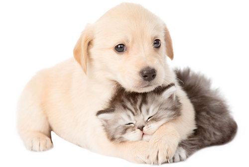 Про нас pets